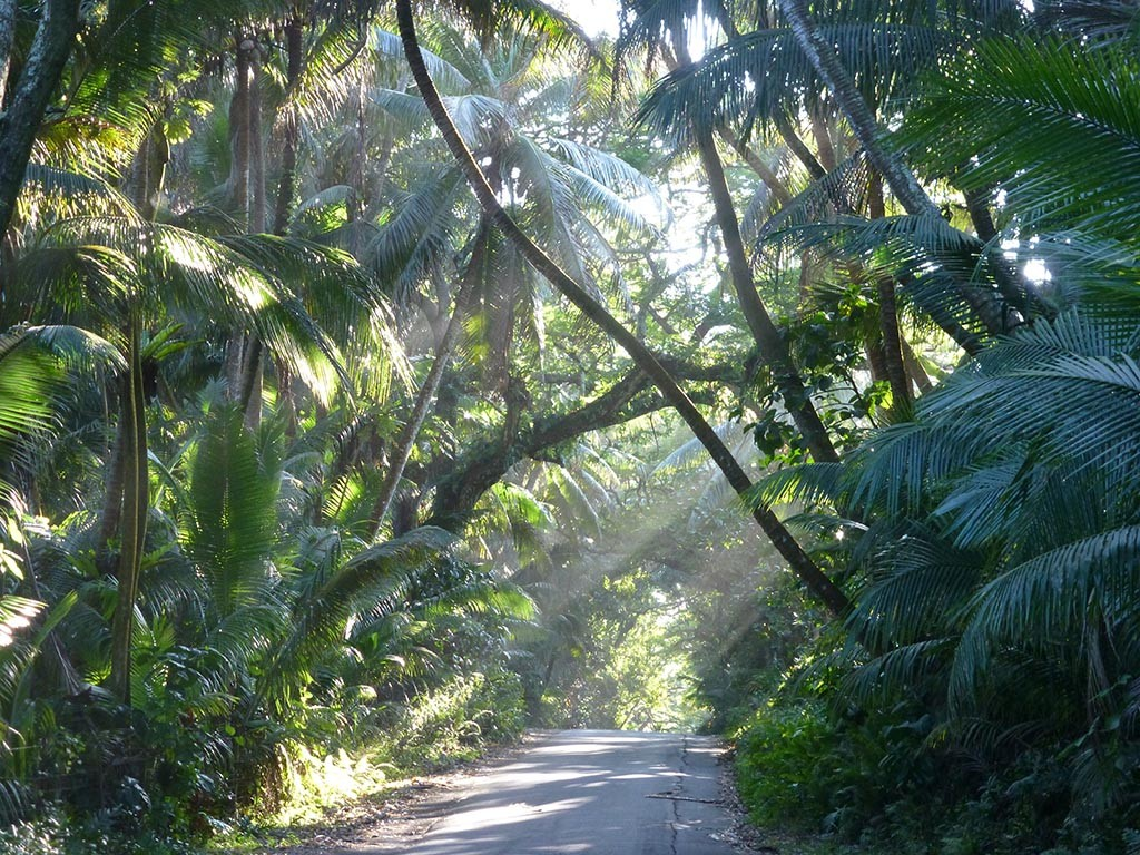 Walk the quiet coastal road through the rainforest